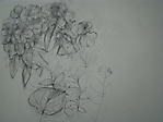 Studie von Lilienblüten